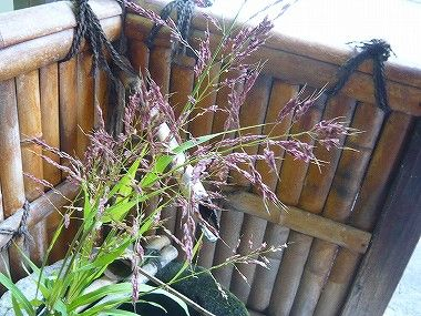 もち花の作り方お客様が教えて下さいました 日田温泉 亀山亭ホテル