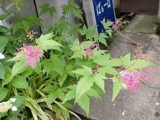 日田祇園祭りの花作りのご案内に参ります